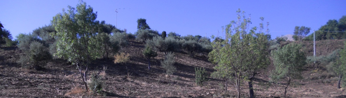 siciliaA
